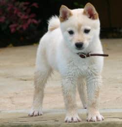 Halsband für Hunde, welches soll es sein?