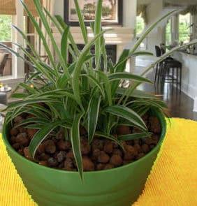 Zimmerpflanzen Pflege Hydrotopf
