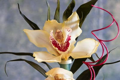 Pflanzen im Bad - Orchidee