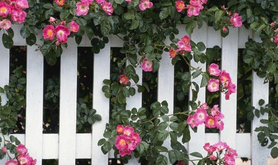 Der richtige Gartenzaun - was sagen die Nachbarn dazu