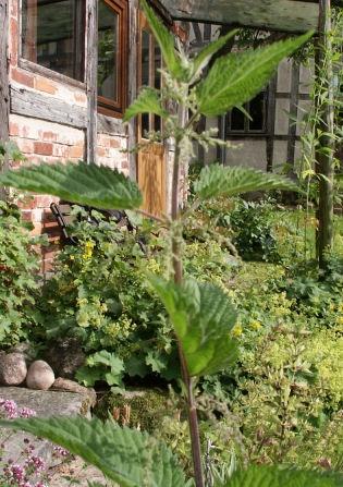 Brennesseln für Brennesseljauche finden sich in jedem Garten