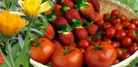 Gemüsegarten anlegen: Obst, Gemüse, Erdbeeren und essbare Blumen