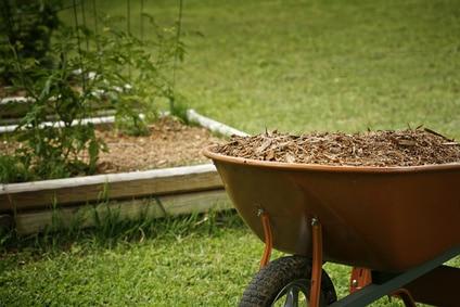 Baumschnitt - für Mulch verwenden