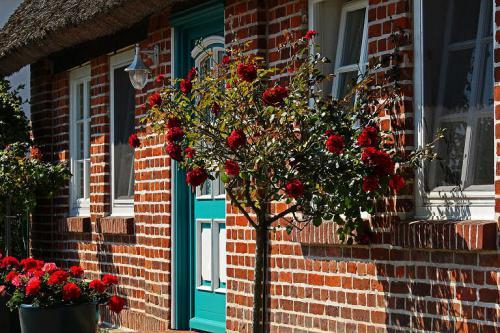 Vorgarten mit Rosen auf der Insel Rügen