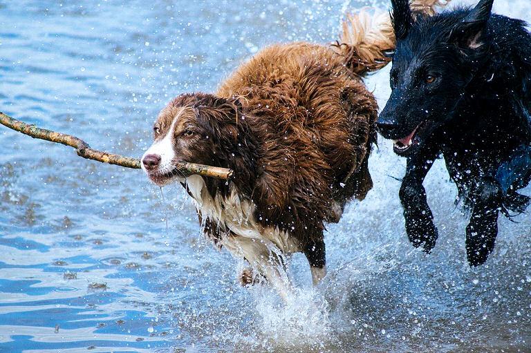 Mehrere Hunde halten
