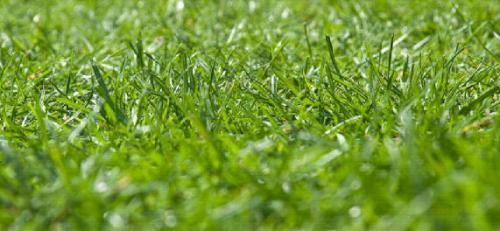 Pflege des Rasen - vertikutieren