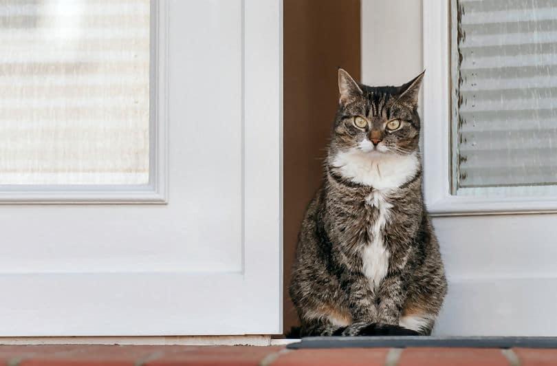 Gut bewachte Haustür