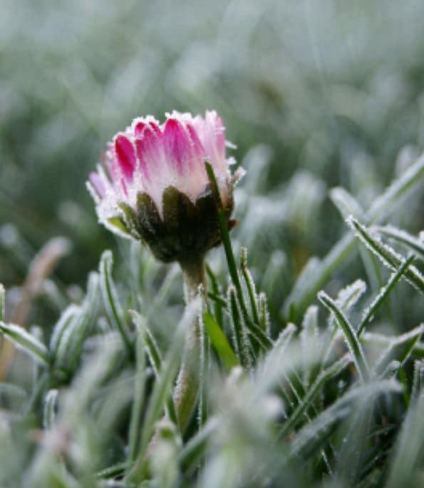 Den Garten winterfest machen sobald es Frost wird