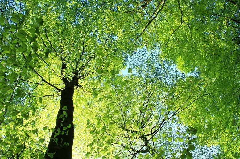 Licht und Schatten spenden lichte Bäume wie Birken