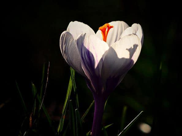 Licht und Schatten Spiel im Garten