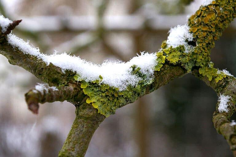 Der Garten im Januar - schneebedeckte Zweige