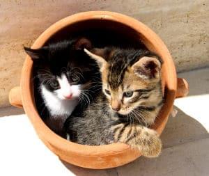 Katzen halten - gleich zu zweit - hat Vorteile und Nachteile