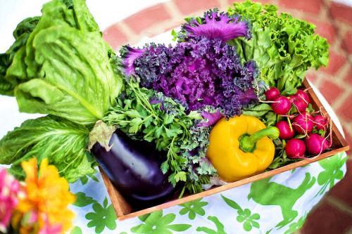 Salat und Gemüse aus dem eigenen Bio-Garten