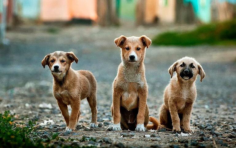 Wie viel Fleisch braucht ein Hund - Welpen brauchen besonders viel Fleisch.