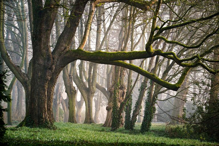 Jeder Baum hat eine charakteristische Holzmaserung