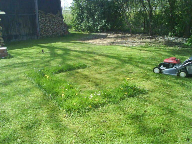 12 Tipps für einen schönen Rasen