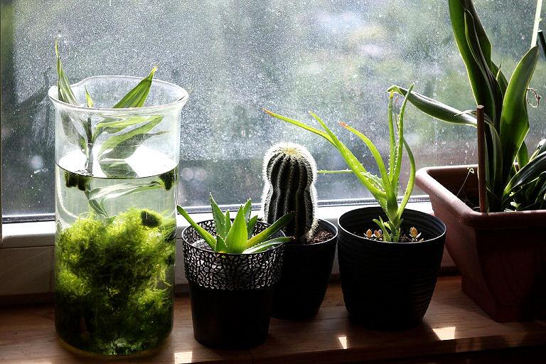 Welches Licht brauchen Zimmerpflanzen?