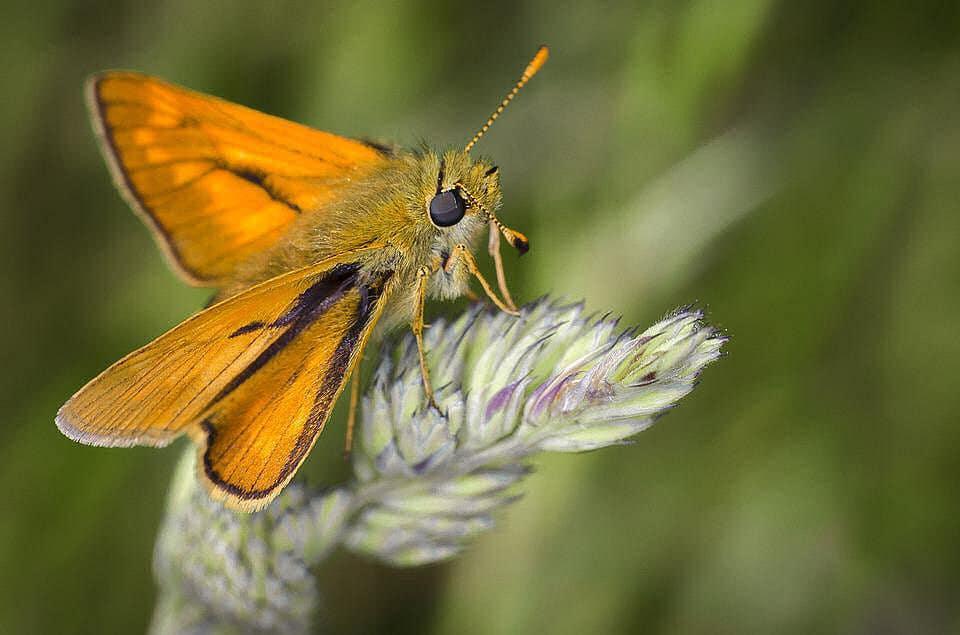 Motten gelten als Schädlinge, Hausmittel aber helfen vorbeugend sehr effektiv