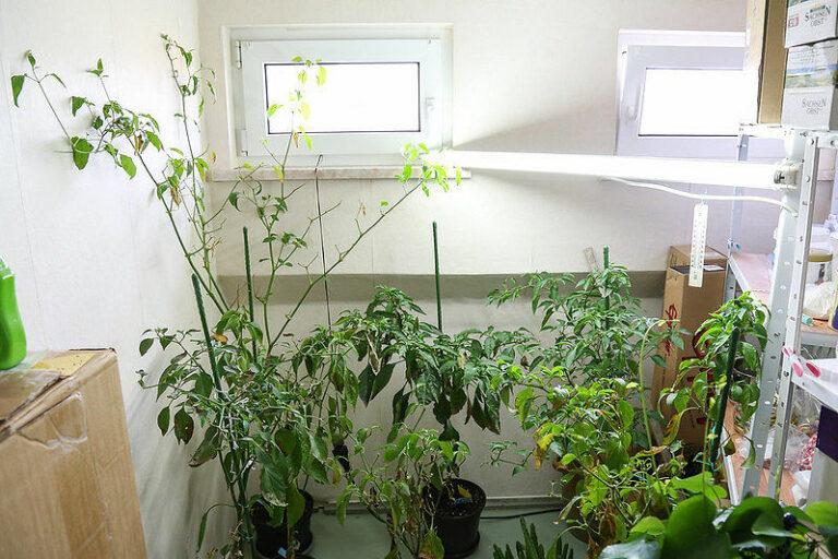 Die Pflanzen richtig überwintern - in einem hellen Winterquartier