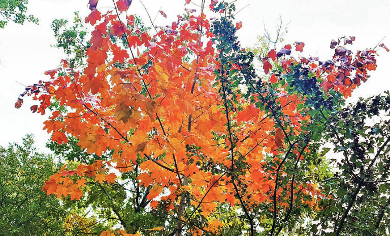 Gartentipps für den Herbst gibt es eine ganze Menge, denn im Herbst ist viel zu tun.