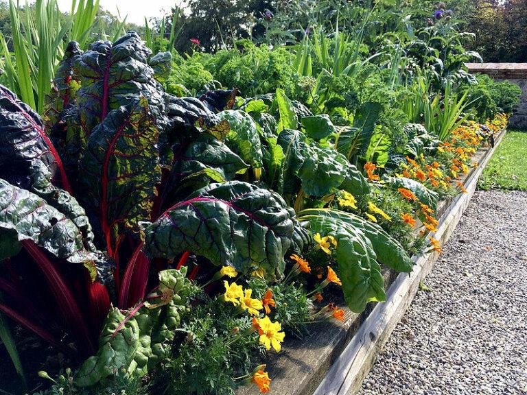 Richtig düngen - da freut sich, wie man sieht, das Gemüsebeet.