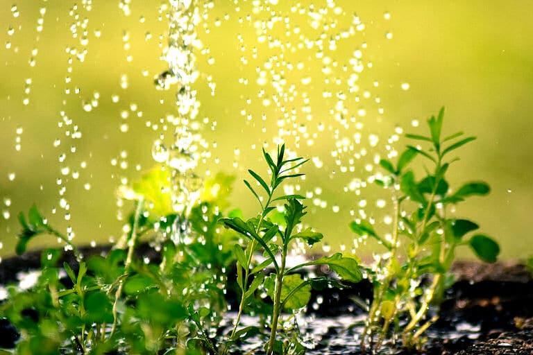 Pflanzen richtig gießen - auch wenn jede Pflanze und jede Blume anders ist.