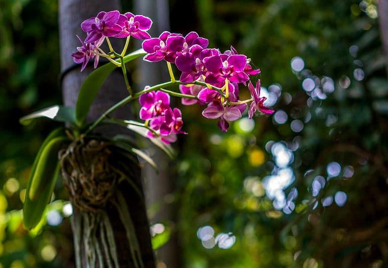 Zu den Feng Shui Energiepflanzen gehört auch die zarte Orchidee.