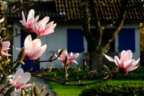 Sein Gartenhaus sollte man am besten schön in Ruhe Schritt für Schritt planen.