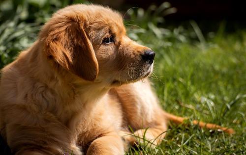 Eine gemütliche Hundeecke im Garten - da freut sich auch der freundliche Golden Retriever