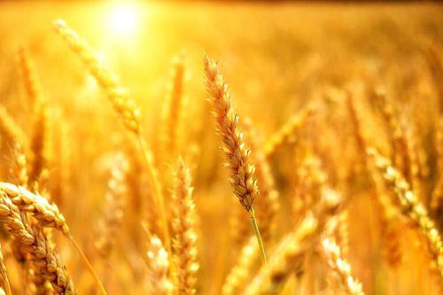 Im Sommer wenn die Sonne die Luft aufheizt - Wärmeschutz ist Klimaschutz