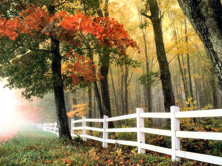 Ein wirklich guter Zaun soll meist noch ein wenig mehr können als hübsch aussehen.