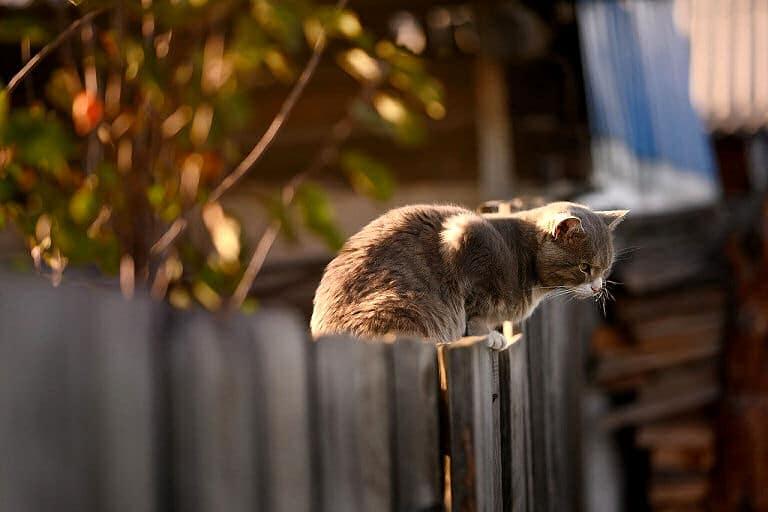 Eine Katze springt so ziemlich auf jeden Zaun - oder über ihn hinweg.